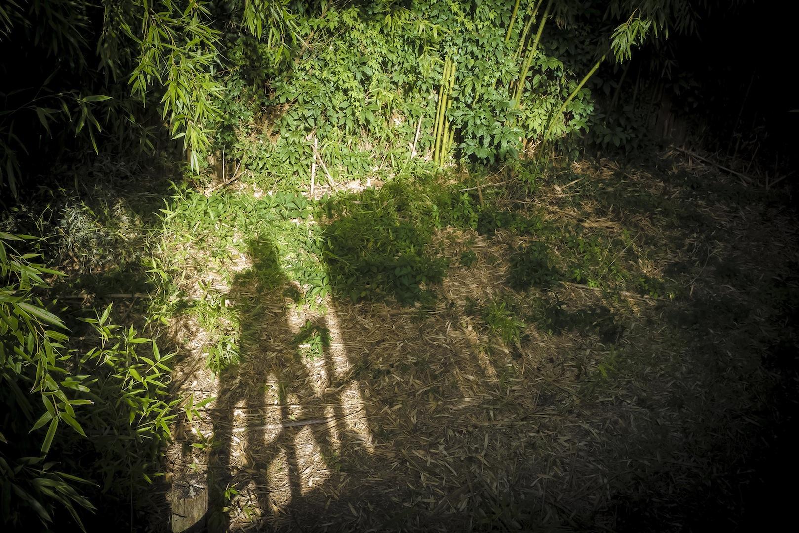 Self-Portraits-07-L1040791